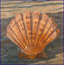 Scallop1656Thumb.jpg